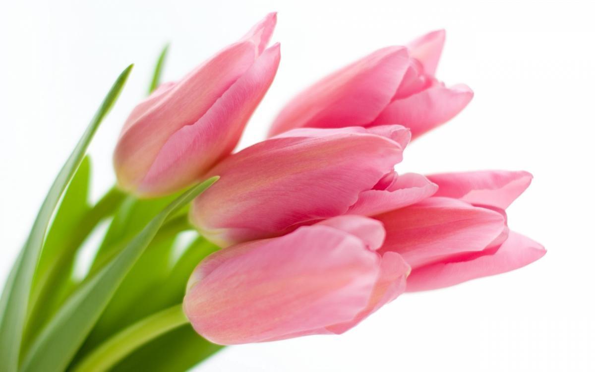 tulpes-1200x750.jpg
